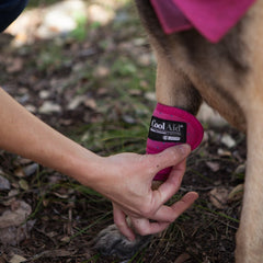 Coolaid Canine Icing Wraps