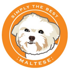 Simply the Best Car Magnet Maltese