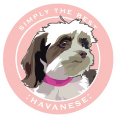 Simply the Best Car Magnet Havanese