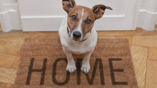 Housing Therapist Reference Letter for Emotional Support Animals (ESA)