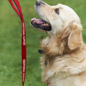 "Service or Emotional Support Dog Red Nylon Leash 5' L x 1"" W"