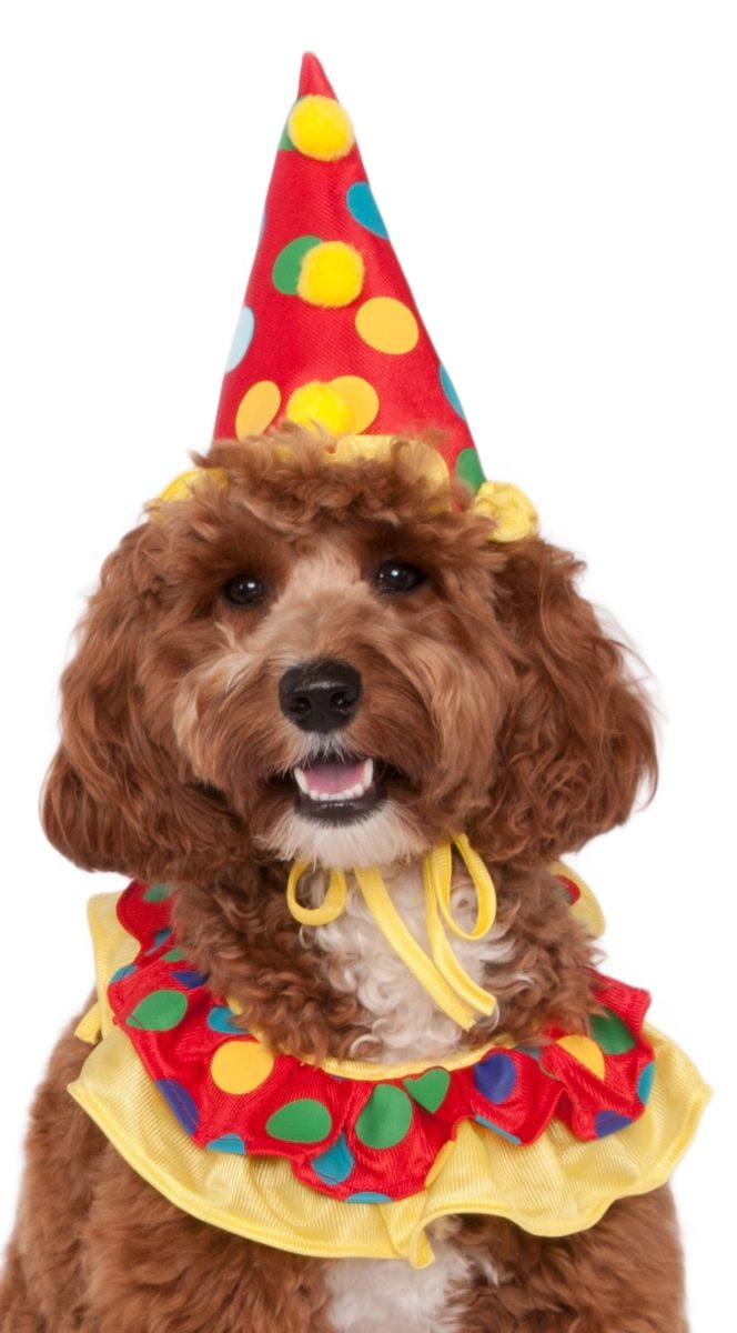 Clown Pet Costume*.