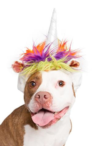 Magical Unicorn Dog Costume.
