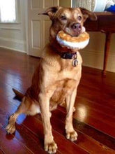 Load image into Gallery viewer, Bagel Dog Toy