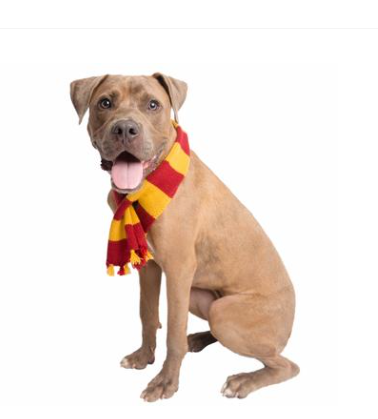 Hipster Wizard Striped Dog Scarf*.