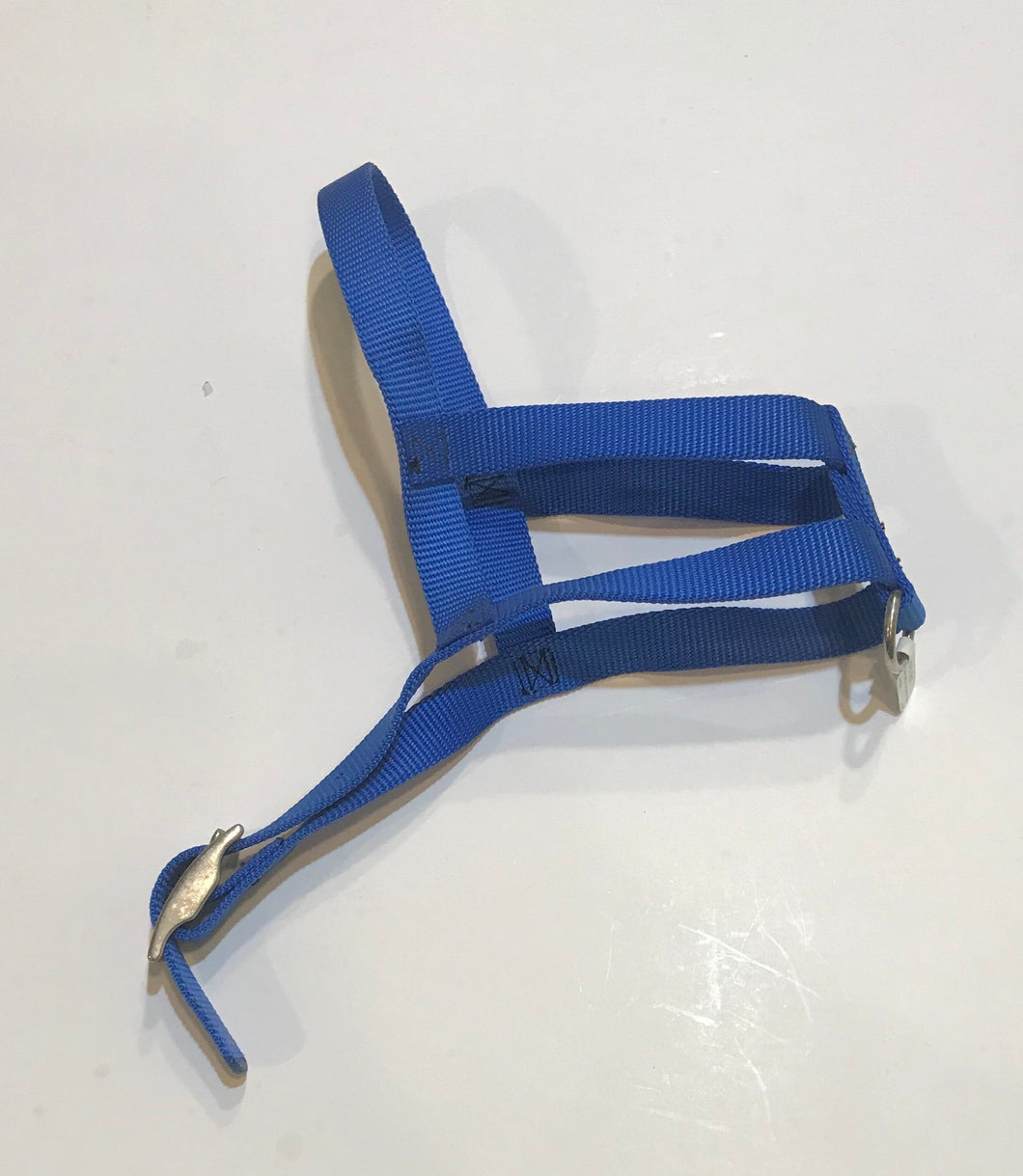 Blue Buckle Harness*.