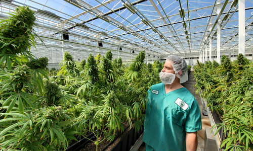 Step Into Our Greenhouse: Q&A with VP of Growing Operations, David Bernard-Perron