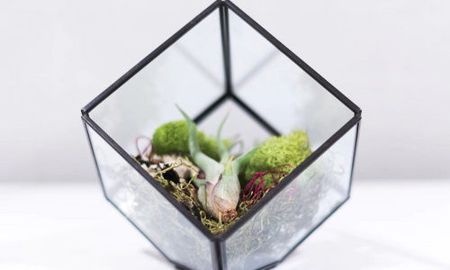 DIY Beach-Themed Glass Jar Terrarium