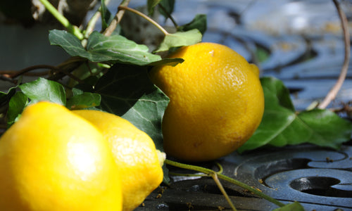Terpenes 101: What is Limonene?