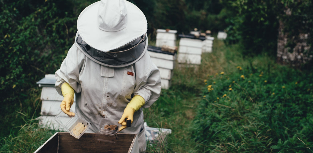 How Industrial Hemp Fields Help Sustain Local Bees