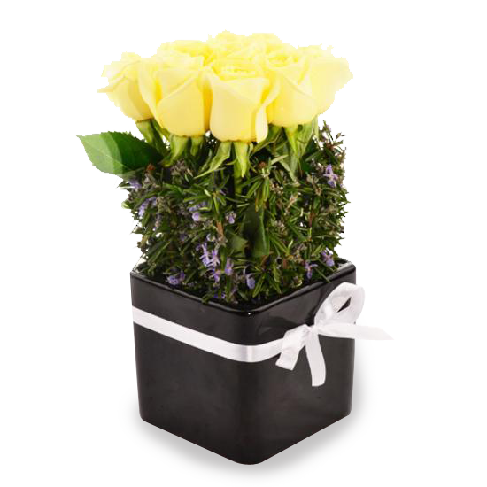 Lemon Rose Pot - Tomuri & Co. Floral Designs