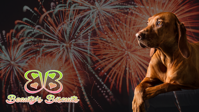 Keeping Your Pet Safe this 4th of July