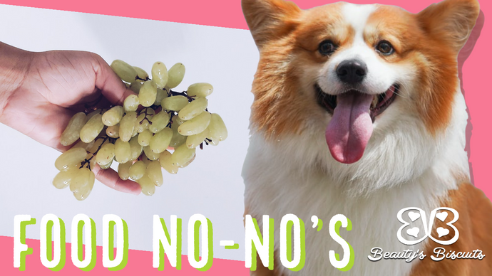 7 Foods Your Dog Shouldn't Eat