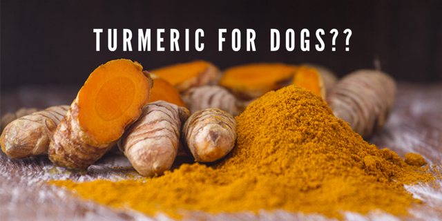 Turmeric For Dogs?