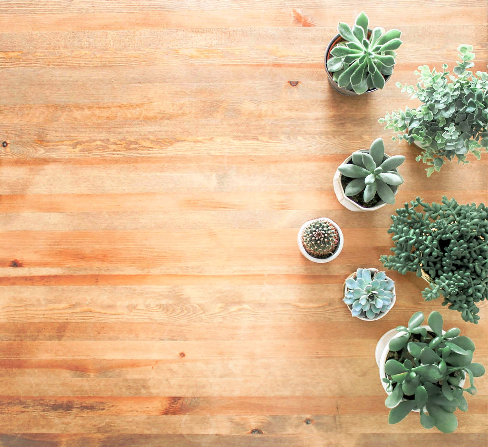 How to Protect Your Hardwood Floors from House Plants
