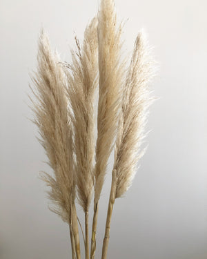 SOLD OUT! NATURAL PAMPAS GRASS STEM - QLD Delivery Only