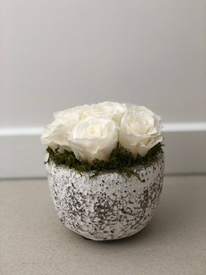 CAMILLE PRESERVED ROSE ARRANGEMENT