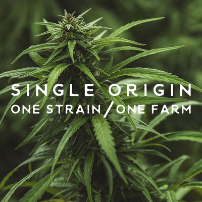 what is single-origin hemp and why does it matter?