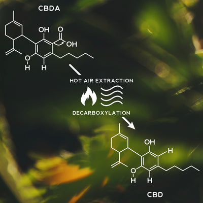 decarboxylation: the activation of cannabinoids