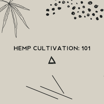 an expert guide to hemp cultivation