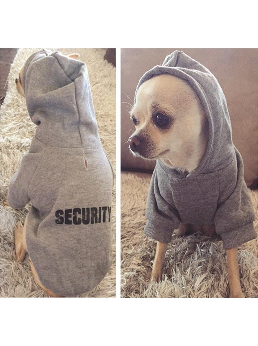 serious security dog