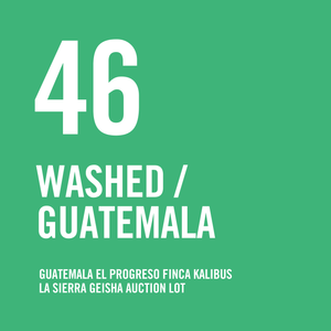 Guatemala El Progreso Finca Kalibus La Sierra Geisha Auction Lot  Washed 200g - Urban Coffee Roaster