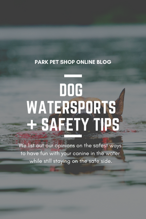 Dog Watersports + Safety Tips