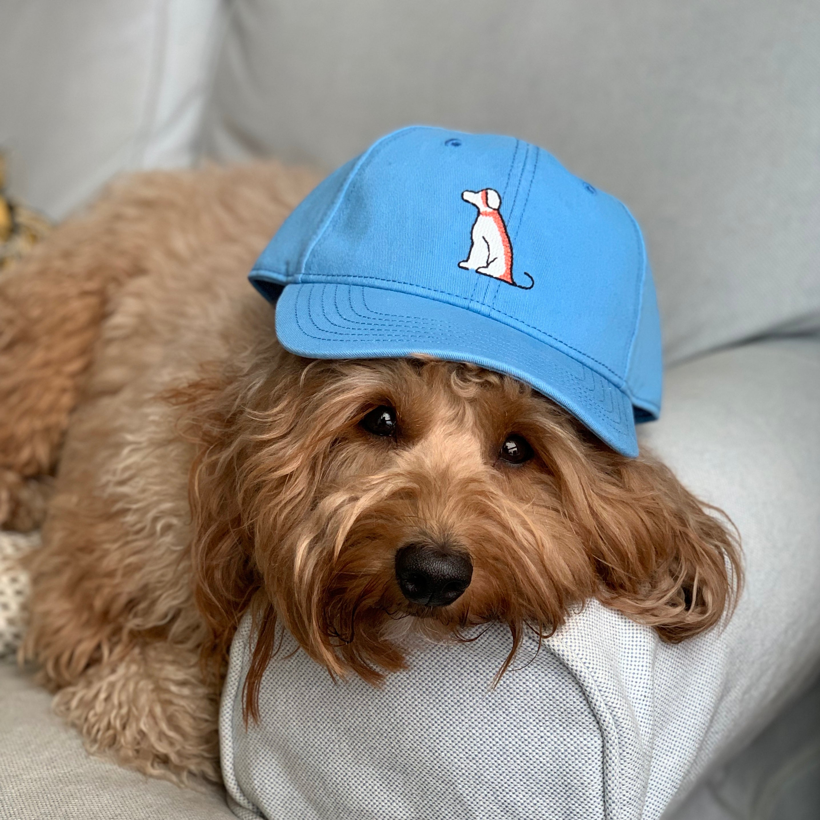 Pupkin Coast Blue Dog Logo Hat