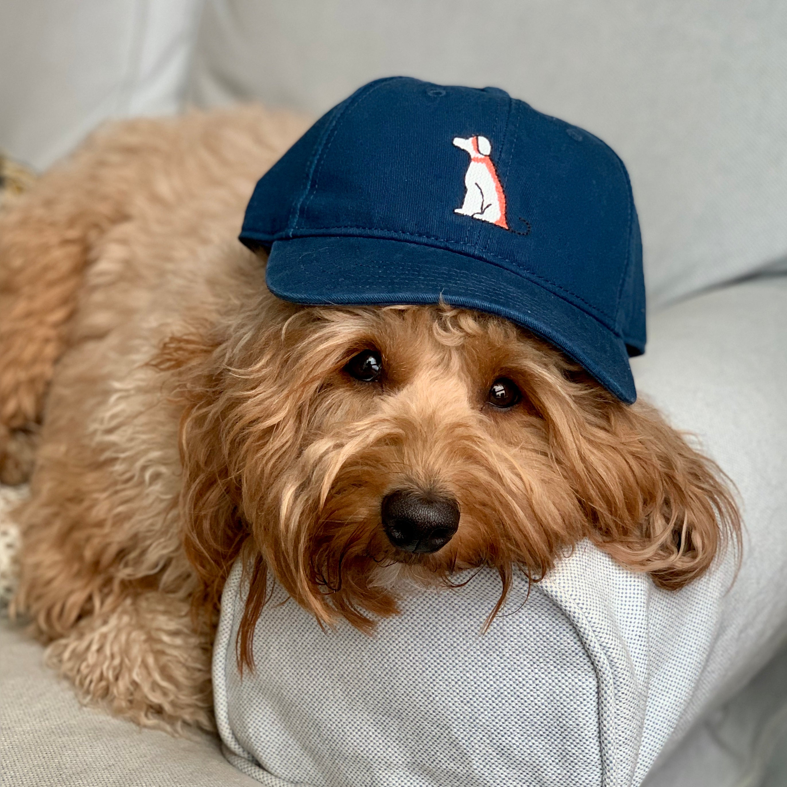 Pupkin Navy Blue Dog Logo Hat