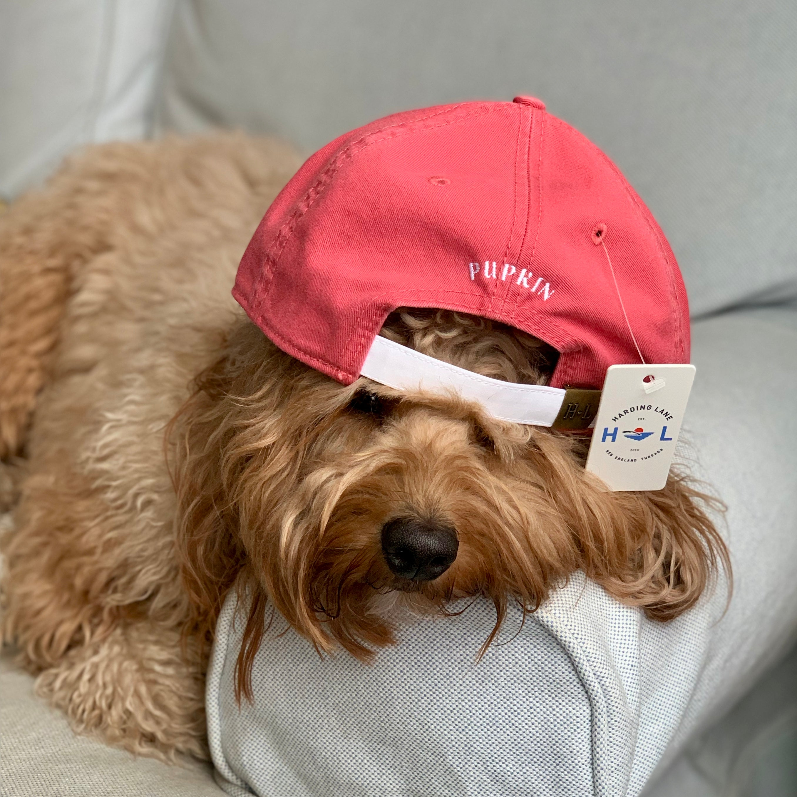 Pupkin Dog Logo Hat Nantucket Red Back