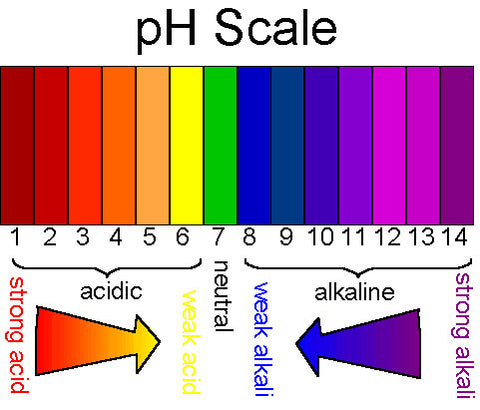 What Is The Skin S Natural Ph Level