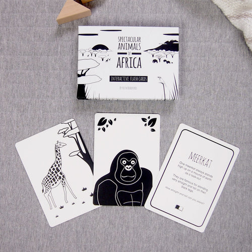 Spectacular animals of Africa flash cards selection and box
