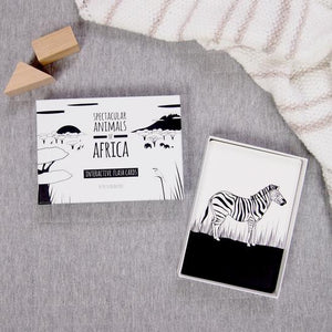 Spectacular animals of Africa zebra flash card and box