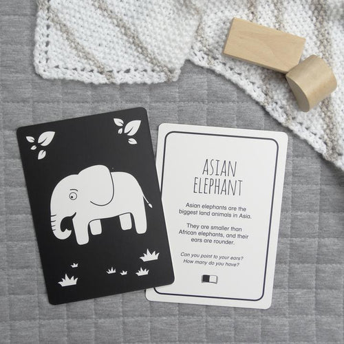 Elephant flash card from Southeast Asia set