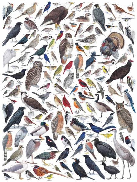 Birds of Eastern/Central North America, 1000 Piece Puzzle