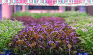 Biostrate™ Microgreens Grow Mats (Retail Pack of 10 sheets)