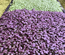 Load image into Gallery viewer, Biostrate™ Microgreens Grow Mats (Retail Pack of 10 sheets)