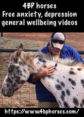 4BP Horses Free anxiety, depression general wellbeing videos