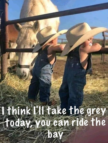 I think I'll take the grey today, you can ride the bay
