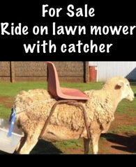 For sale ride on lawn mower with catcher