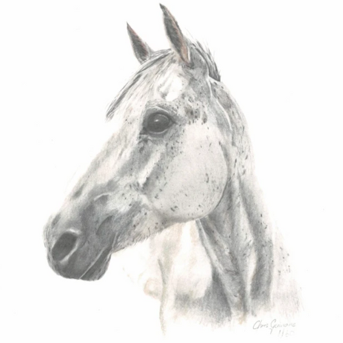 Horse Print - *LIMITED AVAILABILITY*