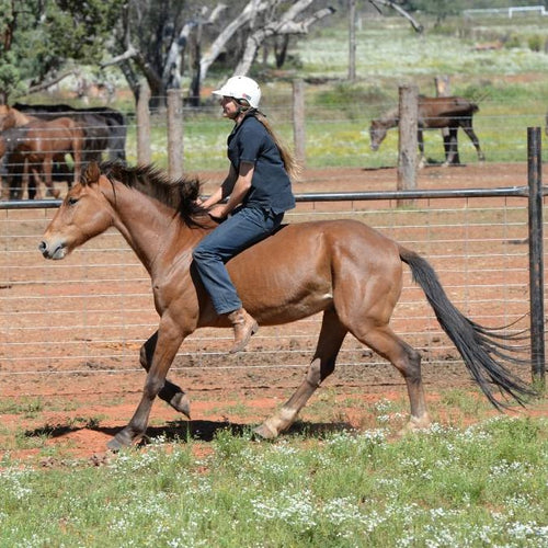 Lesson Bundle 3 - Haltering & Riding - 4BP Horses Australia