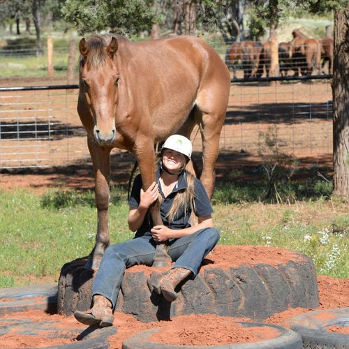 Lesson Bundle 1 - Introductions & Facing Up - 4BP Horses Australia