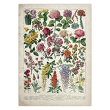 Vintage Flower and Herb Posters-For You Aesthetics