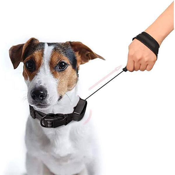 2 in 1 Dog Leash Collar