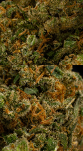 Load image into Gallery viewer, Harlequin 8% CBD hemp tea