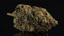 Load image into Gallery viewer, Chiquita Banana 27% CBD <0.2%THC loose hemp tea (END OF BATCH)