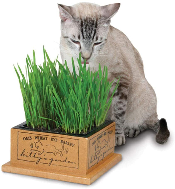 Kitty's Garden- Self Grow Cat Grass Kit