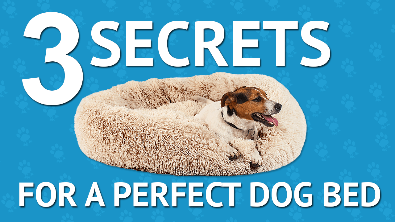 3 Secrets to a Perfect Dog Bed