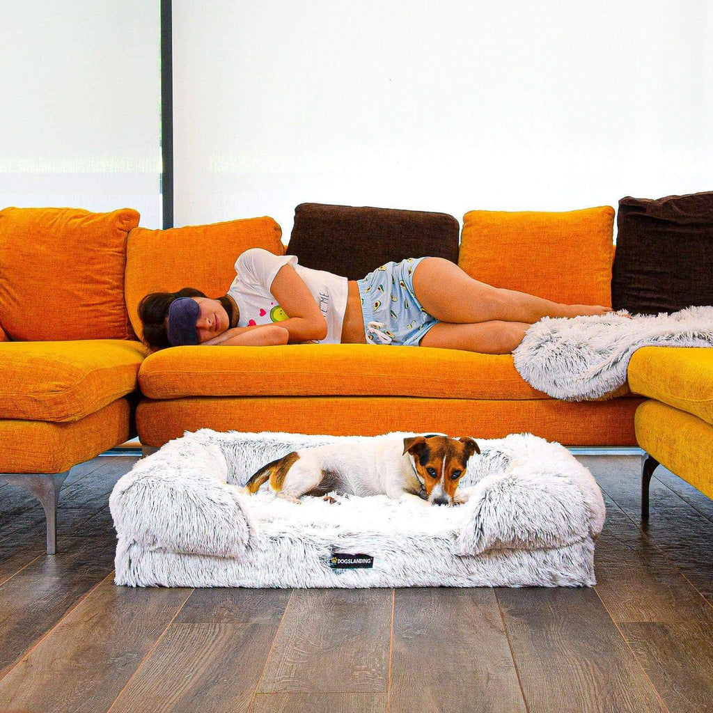 DogsLanding™ Calming Sofa (Memory Foam) [NEW THEME]